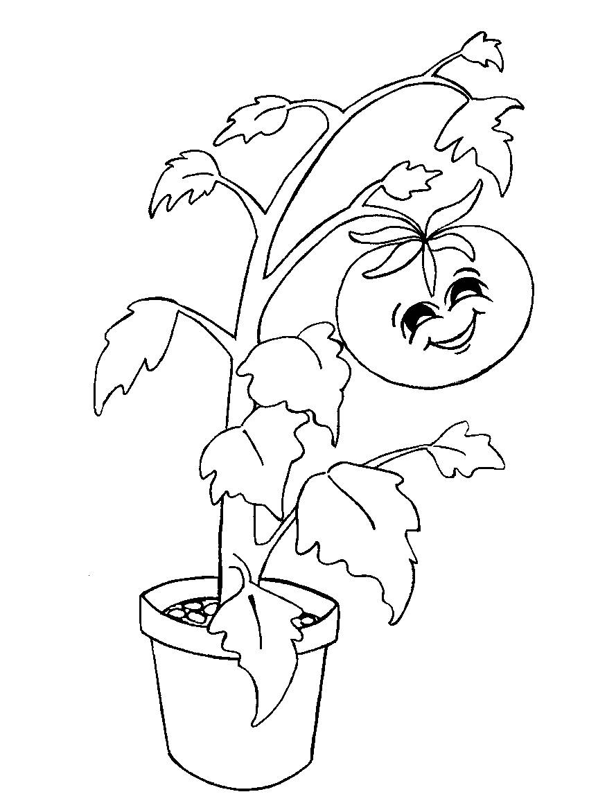 coloring pages of tomato plants - photo#10